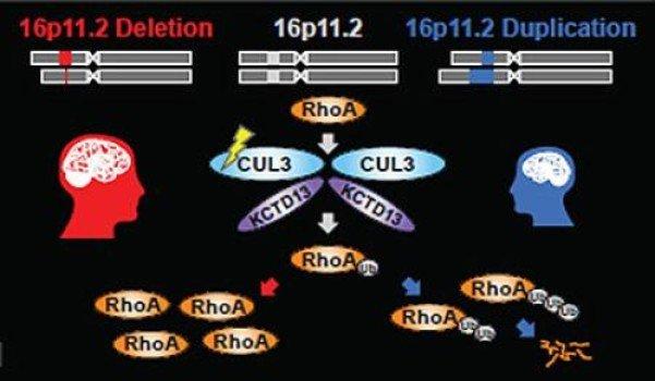 mutazioni genetiche e autismo